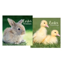 Easter Duckling & Bunny Cards
