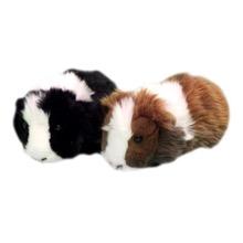 Ben & Jerry Guinea Pigs