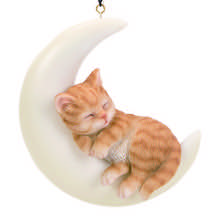 Ginger Kitten on Moon