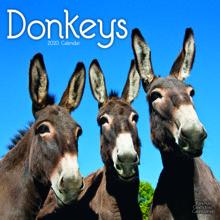Donkeys 12