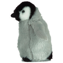 Cuddles the Penguin Chick